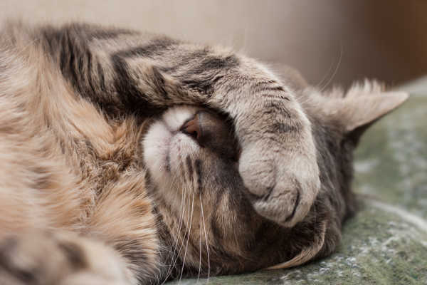 Cat Health Issues: The Ones You Need To Know About