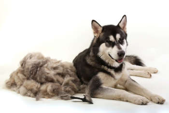 Dog Shedding: How To Stop The Fur Frenzy