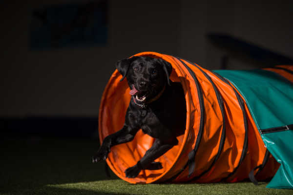 6 Steps To Get Started With Dog Agility Training