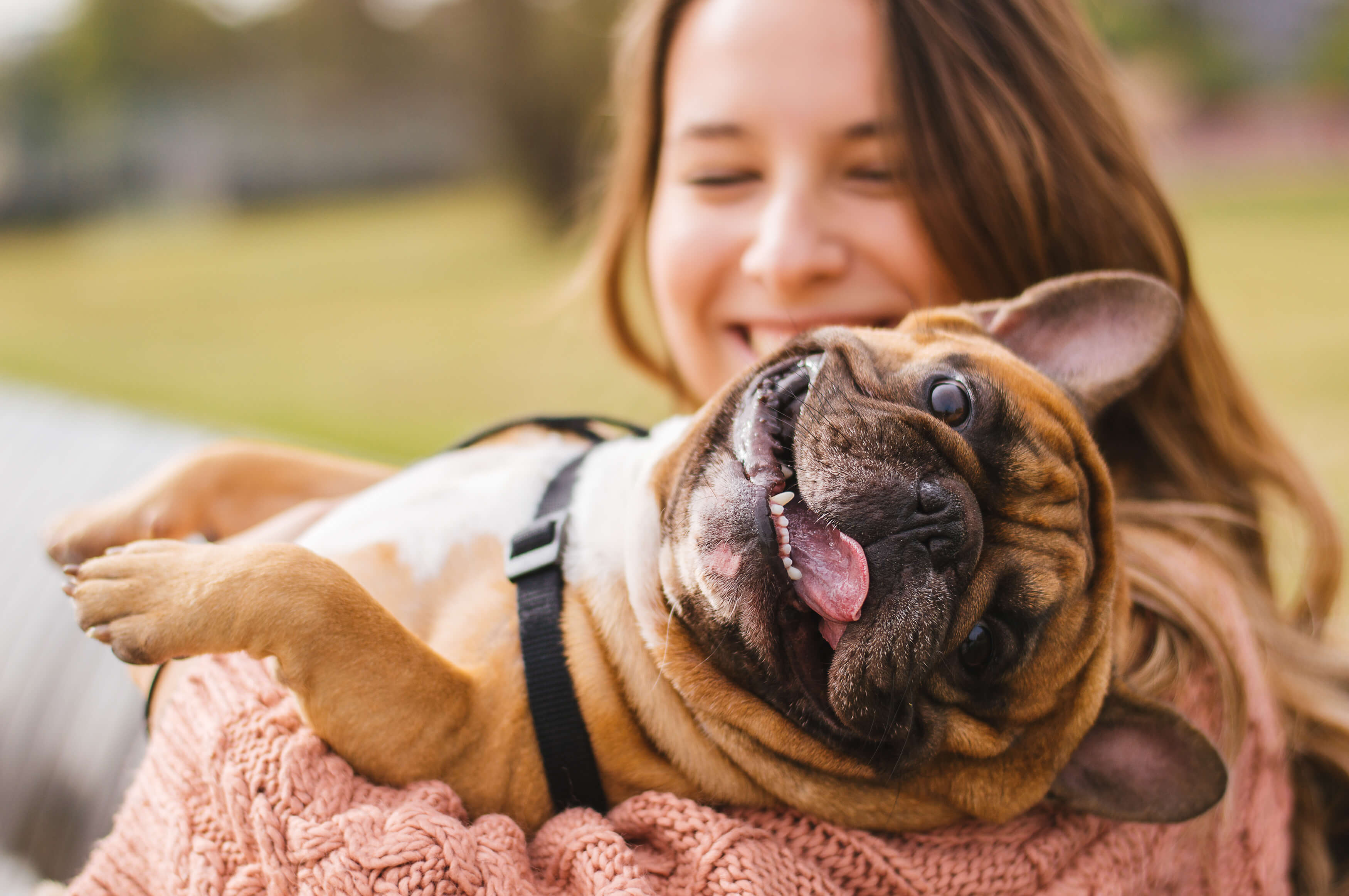 CBD for dogs can support mobility, support the immune system, and promote calmness.