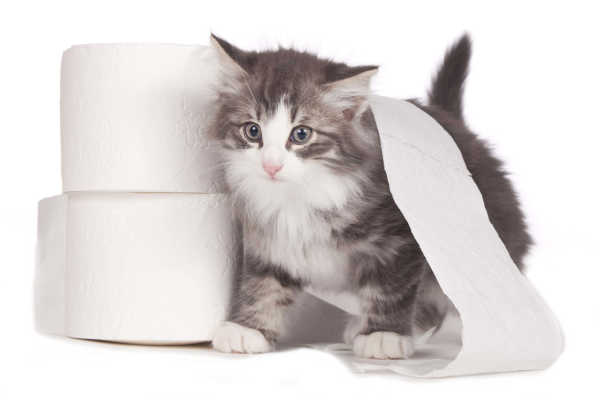 Cat Diarrhea: A Definitive Guide To Treatment