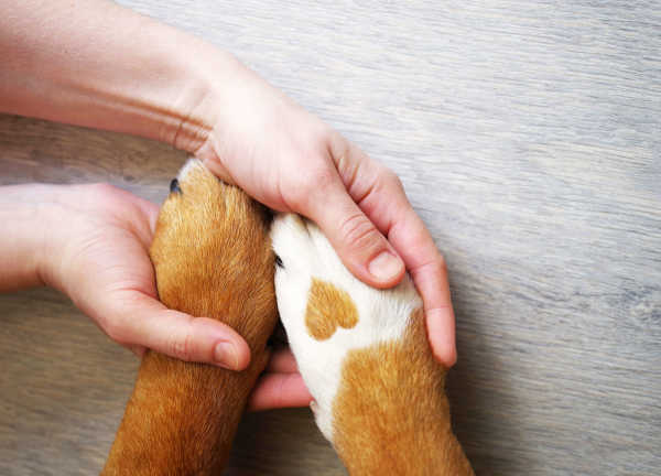 Dog Paw Balm: TLC for Your Pup's Paws!