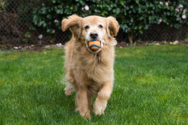 How to Teach a Dog to Fetch: 7 Simple Steps