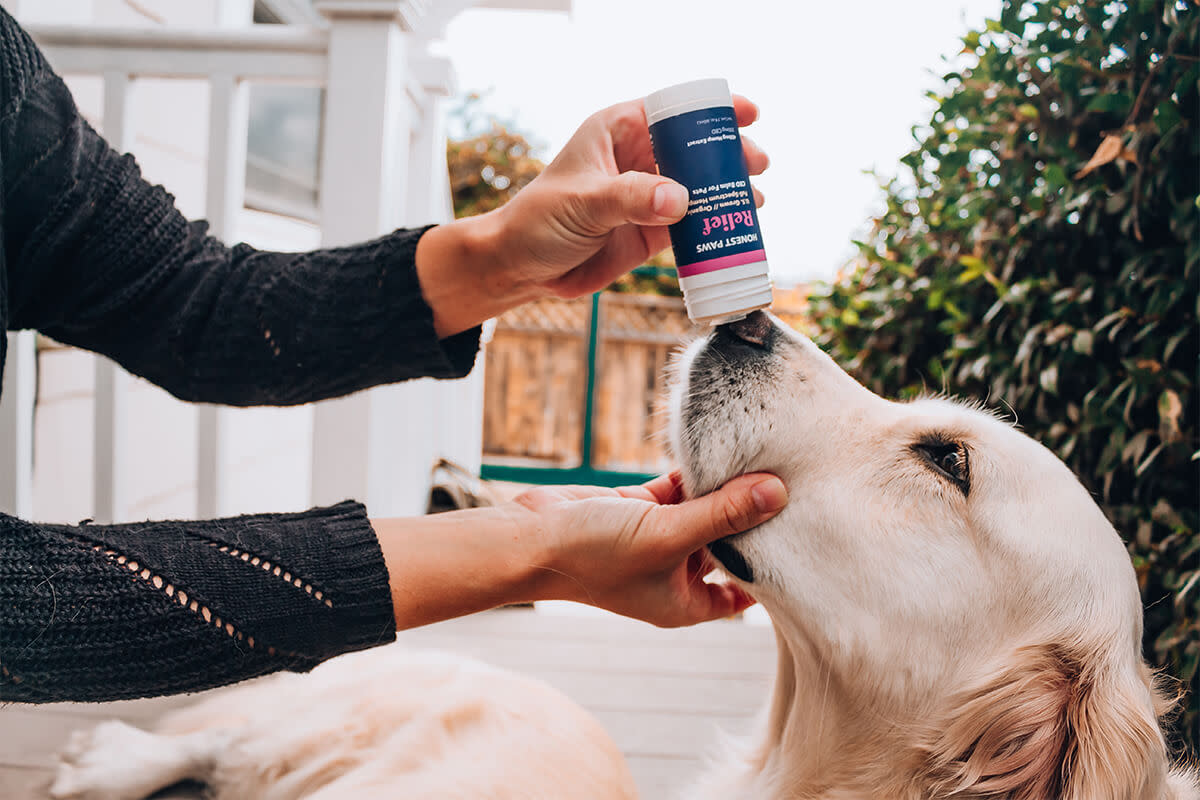 Use Honest Paws CBD For Pets On Dry Noses