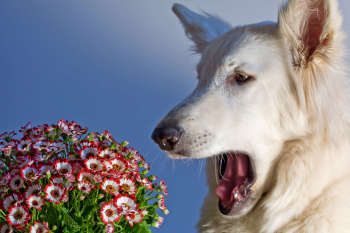 Dog Allergies: How To Tell & What To Do