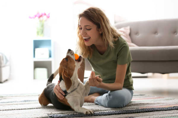 What Are Interactive Dog Toys? Here's Everything You Need To Know