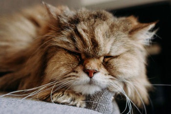 Caring For A Senior Cat: Signs Of Old Age
