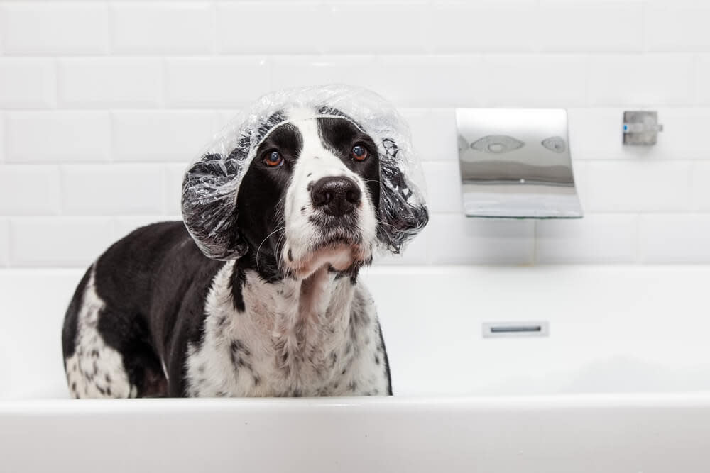 washing your dogs