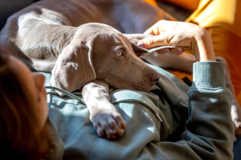 Can Dogs Have Autism? Symptoms + How to Manage Autism in Dogs