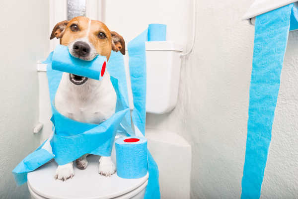 Dog Diarrhea:10 Tell-Tale Signs It's Serious | Honest Paws