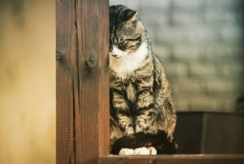 Cat Depression: Nine Signs Of Depression In Cats