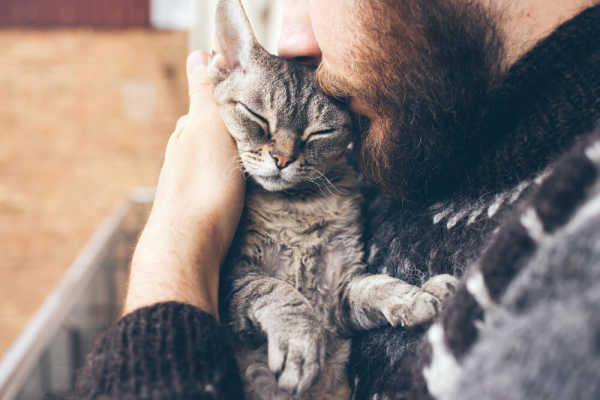 What Can I Give My Cat for Pain Relief?