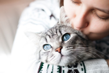 Four Ways To Soothe Your Grieving Cat