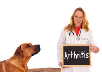 Arthritis in Dogs: A Holistic Care Plan