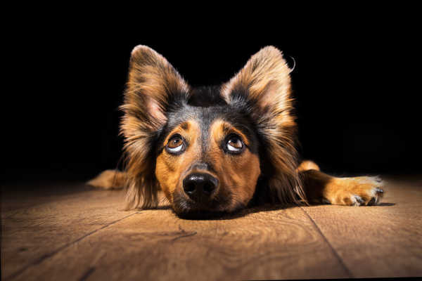 Dog Whining: 7 Reasons Your Dog is Whining & How to Help