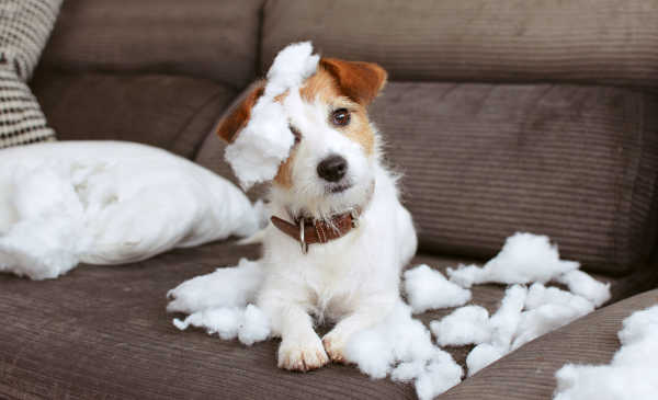 Separation Anxiety in Dogs: How To Soothe Your Pup