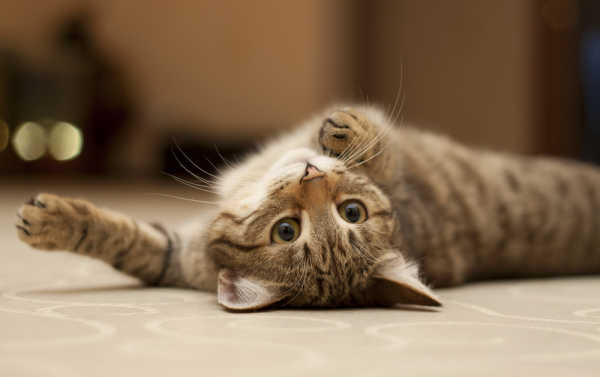 How Long Do Cats Live? Promote A Long Lifespan For Your Feline