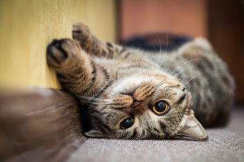Does Your Cat Have Separation Anxiety? Here's How To Help