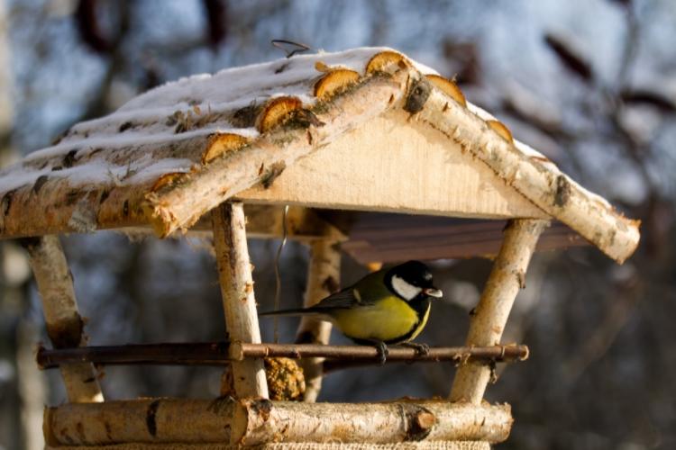 Hvor er det best å plassere fuglebrettet?