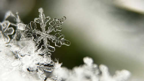 Learning from Snowflakes Feature Image