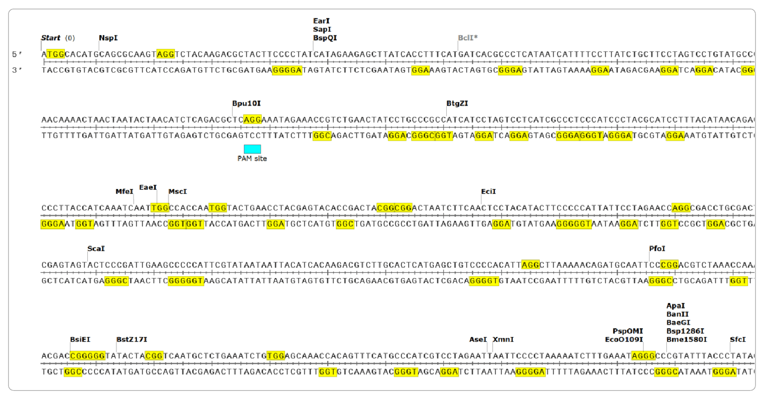 Figure 2: SnapGene screen capture after using search function to find NGG sites in gene target of interest.