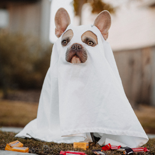 cane travestito da fantasma halloween