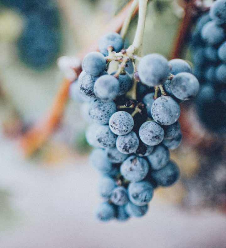 grapes copy