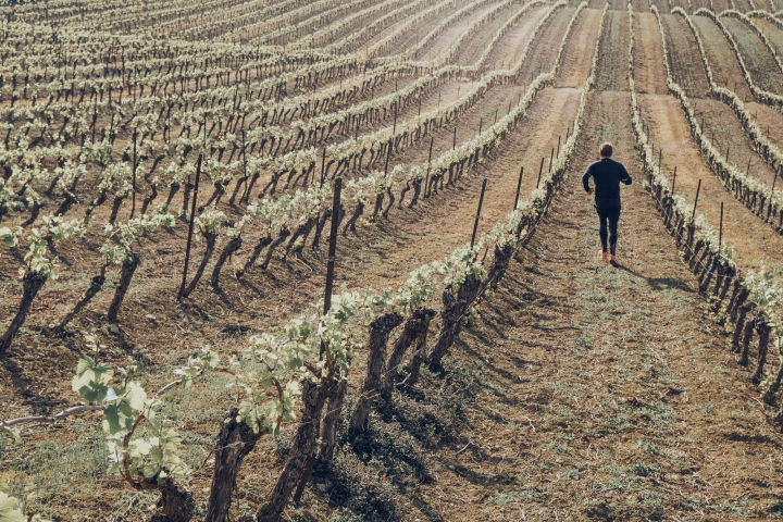 Jogging in the vines
