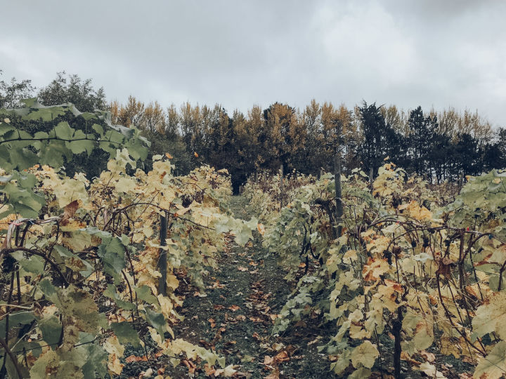 english vineyard