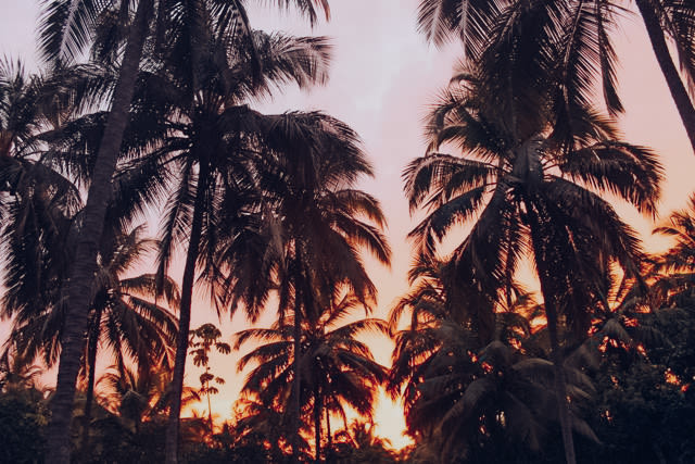 Sunset among the palm trees