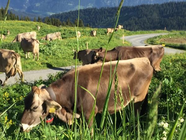Alp Nagens Farmer's Breakfast