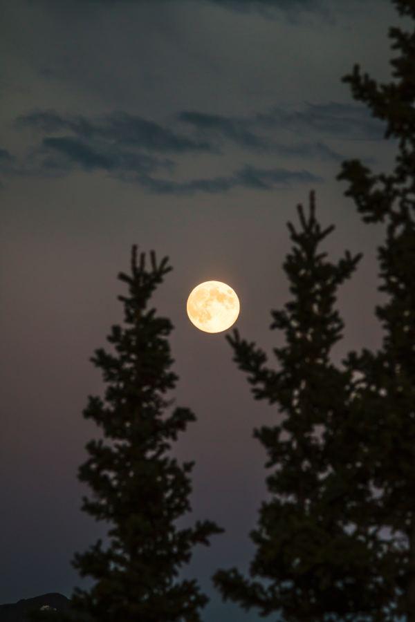 guided full moon downhill run