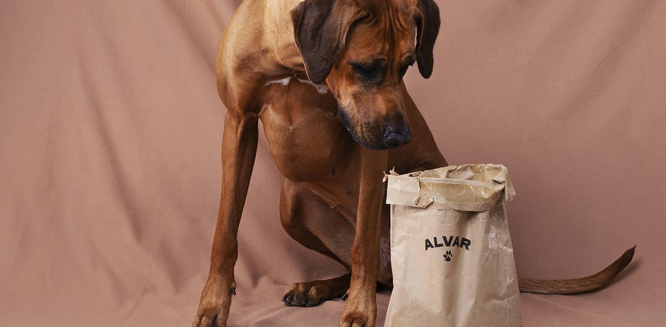 Alvar Pet investement page