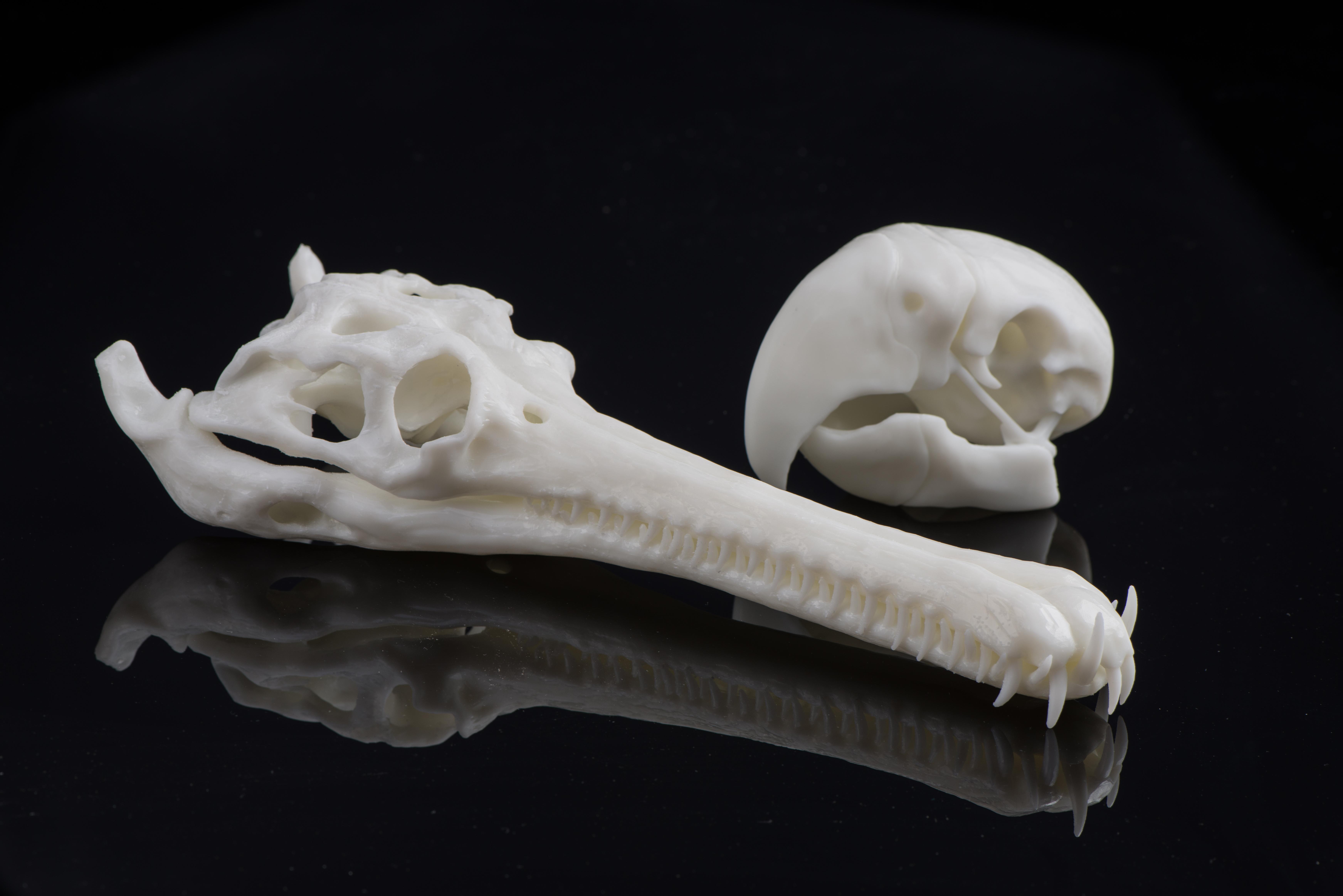 Bones printed in SOMOS resin