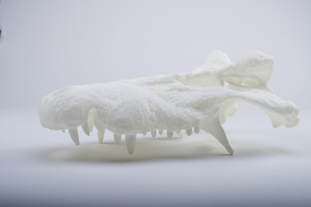 3D printed alligator skull