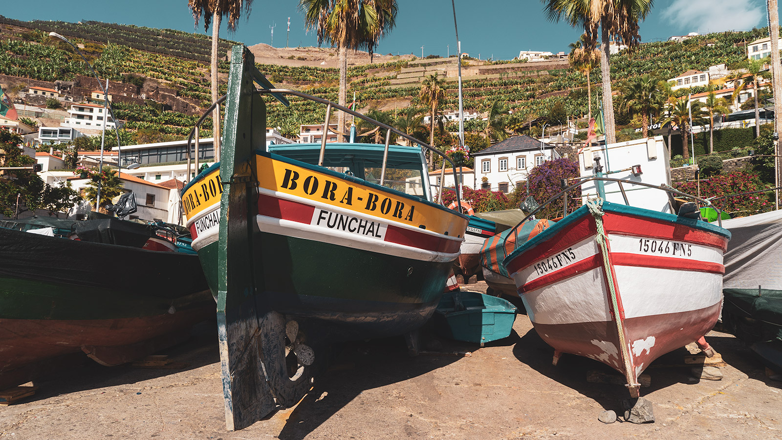 Colorful fishing boats waiting for the next trip at the harbor of Câmara de Lobos. Black Scabbard Fish is the main catch there.