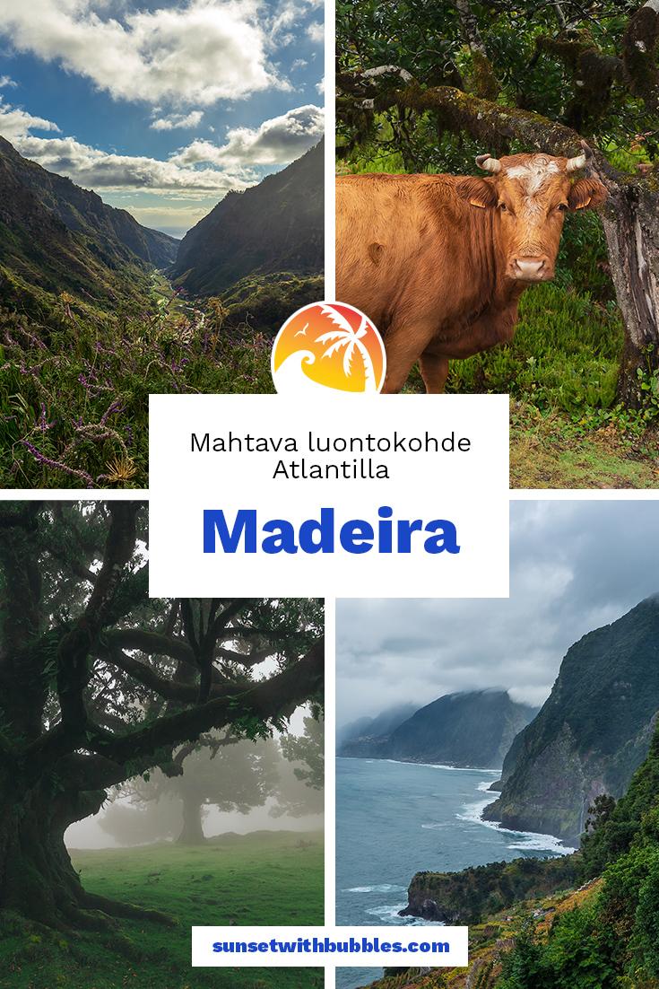 Pinterest: Madeira