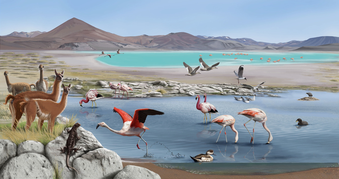 Painting of a valley with two bodies of water with flamingos and various waterfowl, llamas standing beside, and a lizard in the front.