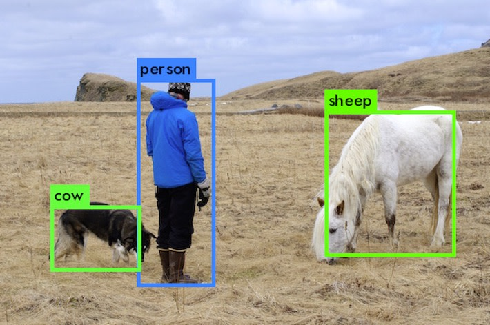 A dog, a person, and a sheep being misclassified by machine vision.