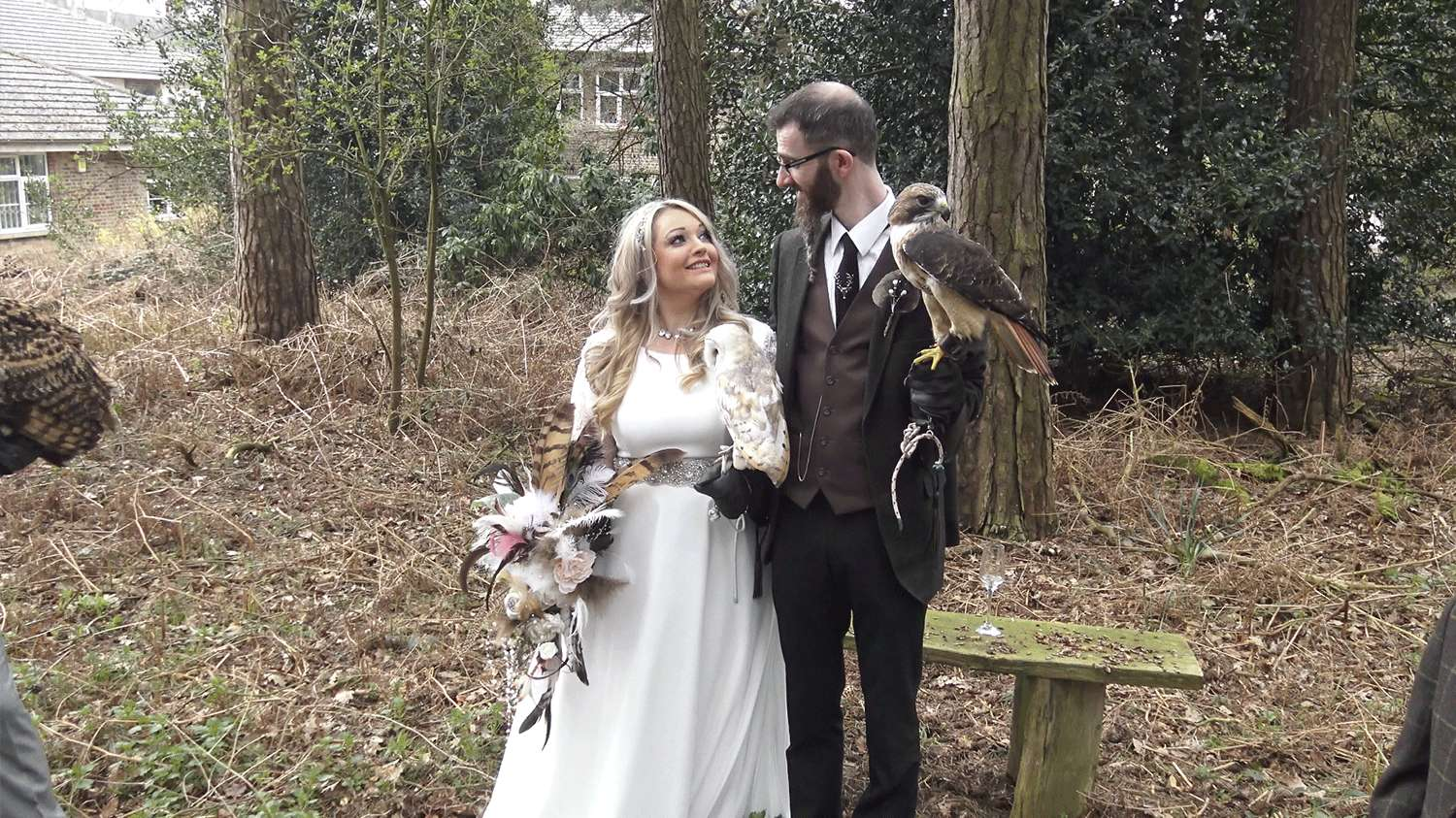 Falconry, forests and feathery friends