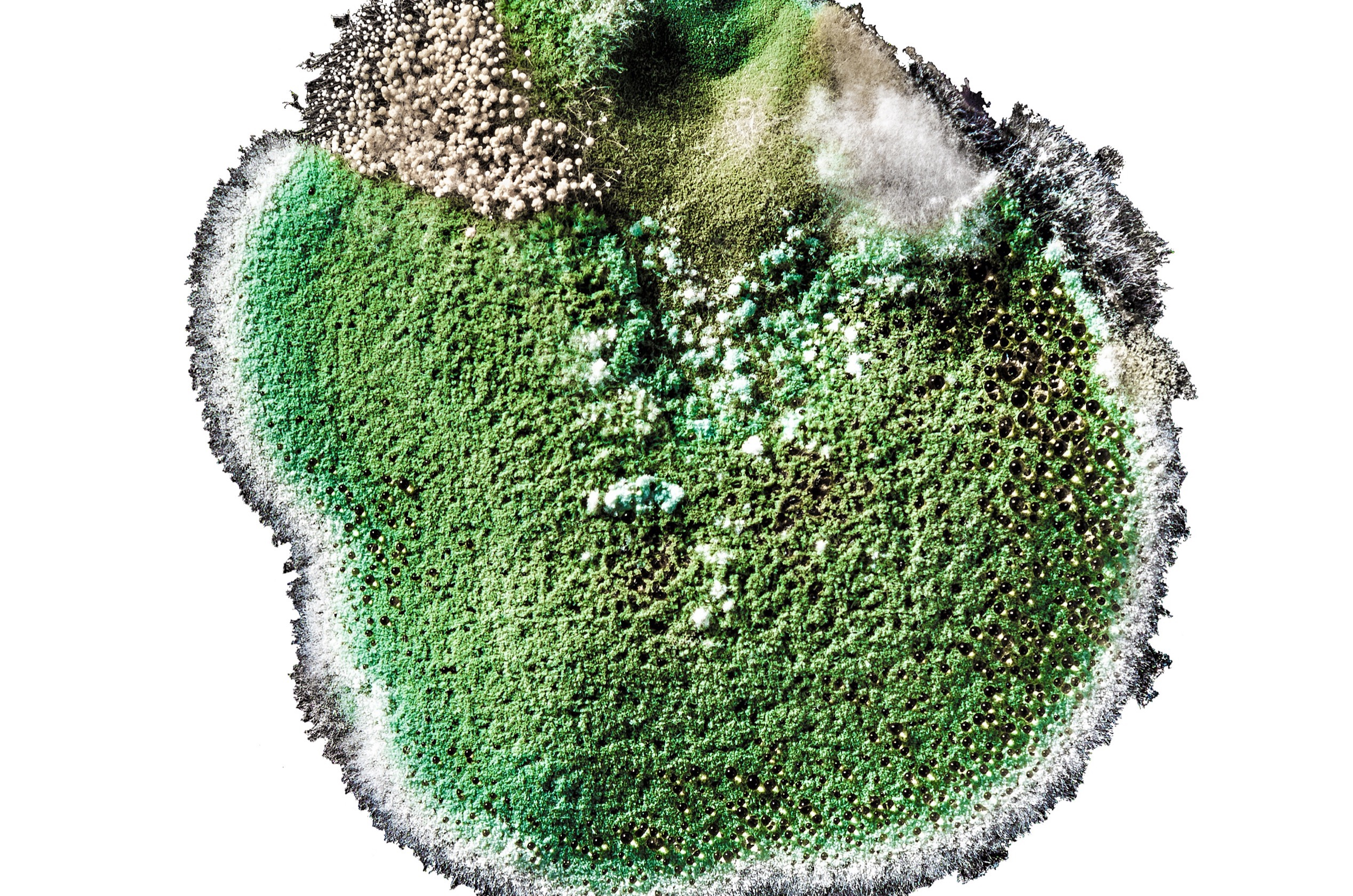 A close-up view of mold.
