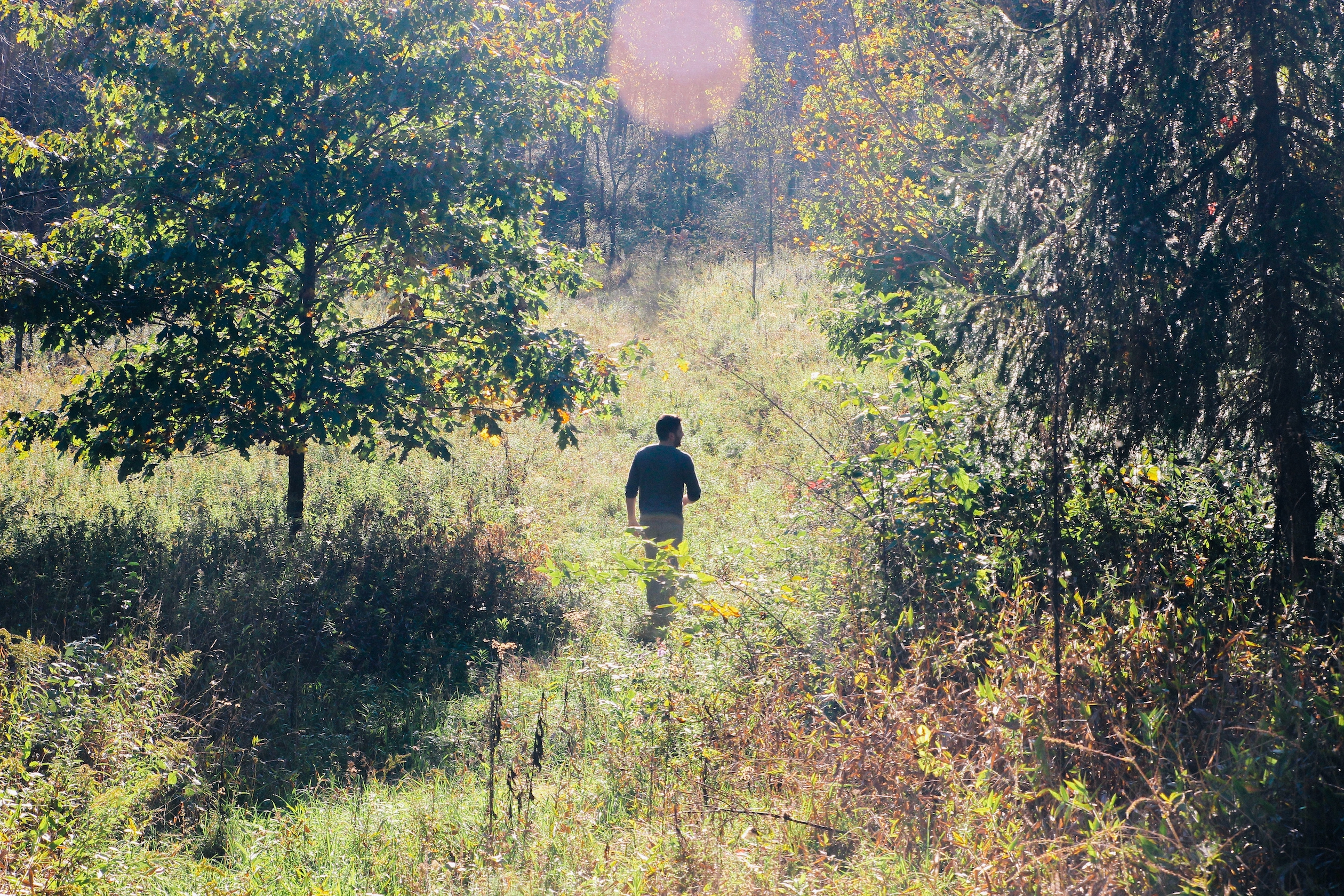Photo of a person walking alone through a lush forest.