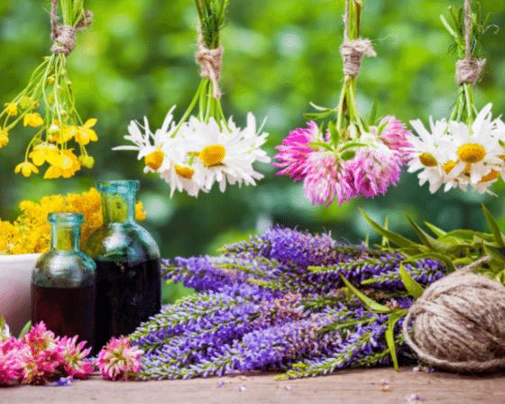Herbs for good Mental Health