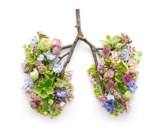 Lungs, Tuberculosis, Symptoms and treatment