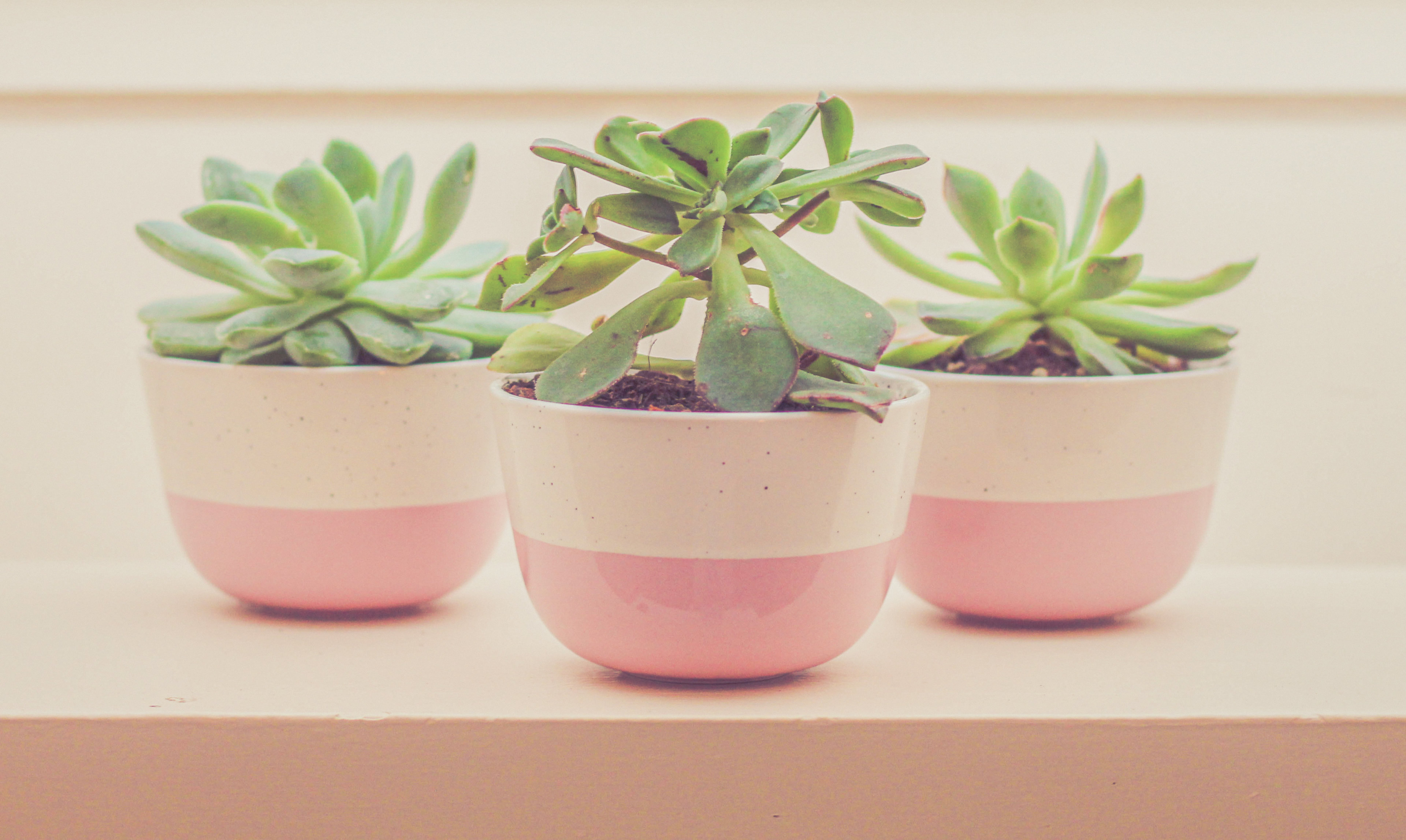 Three small plants in pink and white pots.
