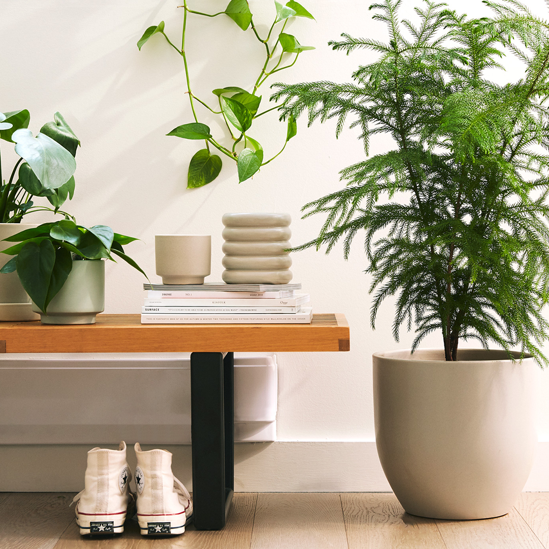 The Sill Review From Black Thumb To Proud Plant Parent Milk Honey