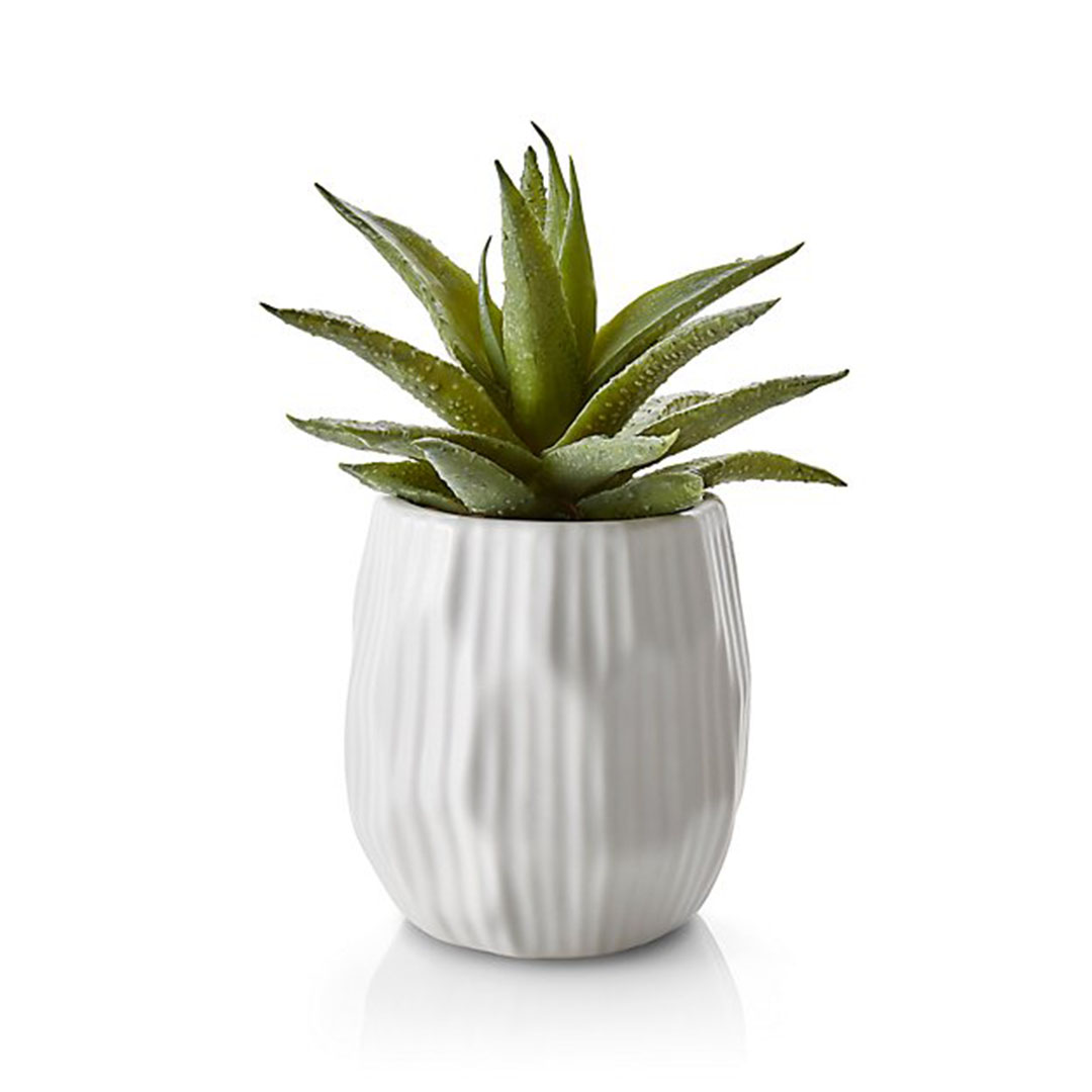 Holiday Gift Idea Plant
