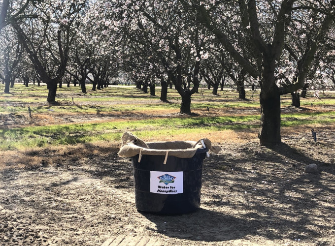 Water for honey bees in an almond orchard