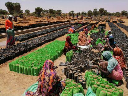 Site de préparation des plantules de Zobo, province du Batha