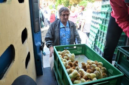 A woman in a hard-to-reach settlement receives one-day-old chickens. Photo: FAO/Viktoriia Mykhalchuk.